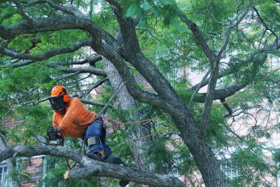 Qualified Tree Pruning Specialists