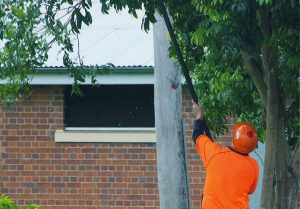 Tree Pruning and Thinning