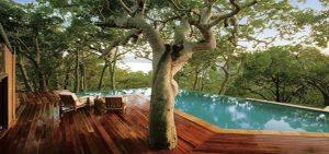 Deck built around tree
