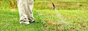Australian Tree Service - weed spraying