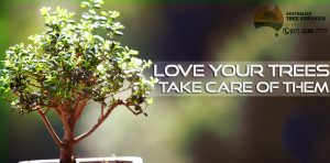 Some Important Tips to Maintain Your Trees - AUSTRALIAN TREE SERVICES - brisbane - ipswich