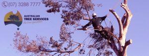 tree removal service brisbane - ipswich