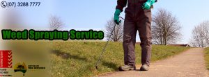 Weed Spraying is a Trouble Free Service in Brisbane - Australian Tree Services - Brisbane - Ipswich