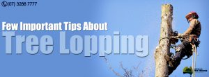 Important Tips about Tree Lopping & Pruning - Australian Tree Services - Brisbane - Ipswich