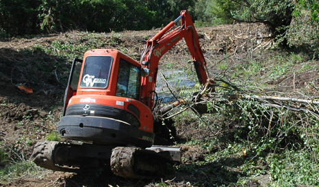 tree clearing 2