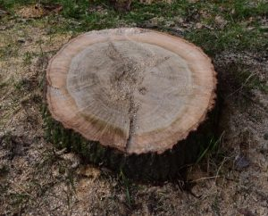 tree-stump