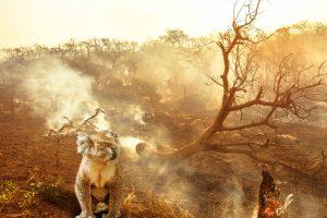 Australian wildlife bushfires