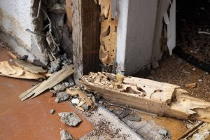 signs you may have termites