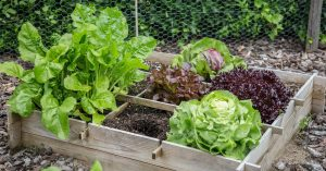 fruits and vegetables to plant in autumn